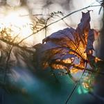Sunny Leaf thumbnail