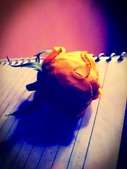 #flower #flowers #yellow #rose#photooftheday #picoftheday #rose #beauty #beautiful #photography #photographer #flowerstagram #likes #instapic #instashot #royal #royals #garden #diary #photograph #photoshoot #nature #natural #instagram #camera #pinterest # (carkguptaji) Tags: beautiful natural likes delhi instaphoto garden royal instapic hdr nature instagram rose photooftheday picoftheday beauty flower flowerstagram photography pic photoshoot royals photograph photographer india camera pinterest yellow diary instashot flowers