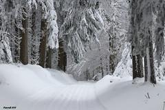 Les pistes de ski de fond  à la Verrerie (BPBP42) Tags: hiver neige snow frost paysage landscape landschaft