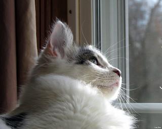 Watching Ladybugs
