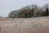 N-Ice . . . . (doc030395) Tags: iowa winnebagocounty freezingrain early morning landscape treeline korthsmeadow