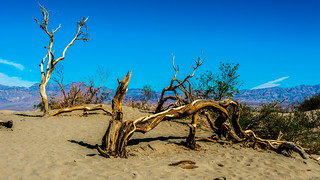 Death Valley National Park California . Mesquite Flat Sand Dunes