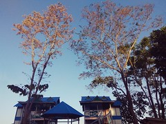 A Vacation Cottage (ainulislam) Tags: vacation holiday sunlight nature national cottage home blue sky trees outdoors sunshine sunset sunray travel visit sajek sajekvalley bangladesh rangamati moody mood explore lowangle highangle lookup branches mobile phone mobi