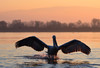 Coming (MoGoutz) Tags: red lake kerkini dalmatian pelican lithotopos nikon d500