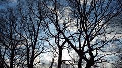 Brickfields Country Park, Aldershot. (BIKEPILOT, Thx for + 4,000,000 views) Tags: winter weather brickfieldscountrypark park woodland aldershot hampshire england uk trees nature flora silhouette britain