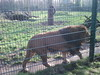 100_0164 (kevinrayworth) Tags: blackpoolzoo blackpool zoo