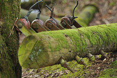 Fallen telegraph pole (N'GOMAPHOTOGRAPHY) Tags: birds nature robin jay woodpecker shovler duck goldeneye tufty woods nuthatch rabbit coventry warwickshire