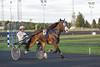 RP1C2425 (edxge84) Tags: hästsport häst kusk travbana trav bodentravet