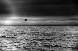 die Möwe fliegt über das Wasser