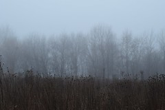 Fading in the fog (marensr) Tags: mist fog woods trees grasses sky motrose point bird sanctuary