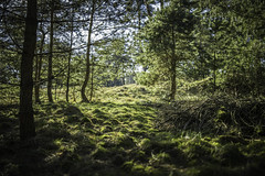 Hoge Veluwe, the Netherlands (Sjaco Manuputty) Tags: nature woods forest trees grass moss lights sunlight nationalpark hogeveluwe netherlands dutch colors samyangaf35mmf14 samyang 35mm