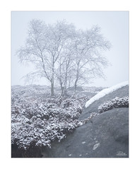 Whiteout (JRTurnerPhotography) Tags: fujifilm fujix fujixt2 fujinonxf50140mmf28 fujifilmx jaketurner jrturnerphotography picture print image photo photography photograph photographer mirrorless mirrorlesscamera longlens longlensphotography telephoto peakdistrict peakdistrictnationalpark nationalpark uk unitedkingdom gb greatbritain europe eu britain britishcountryside countryside woodland forest woods tree trees wood 2018 february landscapephotography landscape snow snowing snowy winter derbyshire chesterfield hathersage mist fog birch silverbirch heather tor overowler overowlertor surpriseview secretgarden hopevalley lichen mothercap
