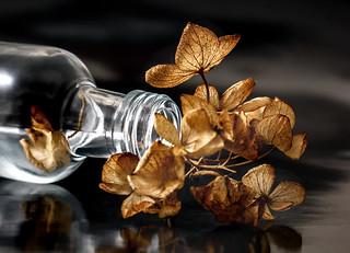Macro Monday - In a Bottle