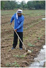 L'arroseur (Le Zélateur) Tags: agriculteur agriculture champs personnes asie thaïlande arrosage