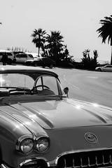 CALIFORNIA (su4jsus) Tags: blackandwhite usa california lagunabeach dogs cars people flowers birds shadows travel starfish ducks sand spiders