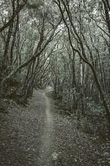 Angra Woods (sebastiano.riva) Tags: azores azzore terceira montedobrasil forest foresta angradoheroísmo daarklands