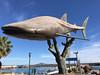 shark whale monument (ikarusmedia) Tags: whale shark monument sculpture bay marine island coronado blue sky clouds boats darsena loreto natio national park baja california sur mexico mammal