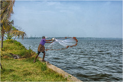 Cochin , Kumbalangi  Village ... the fisherman ... (miriam ulivi - OFF /ON) Tags: miriamulivi nikond7200 indiadelsud kerala cochin kumbalangivillage kochi pescatore thefisherman acqua water lagoon laguna retedapesca man people palmedacocco coconutpalms fishingnet