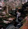 Acharn (smacvean) Tags: rolleiflex28f rolleiflex scotland river forest waterfall snow winter film kodak kodakektar100 120 6x6