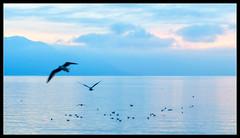 Montreux, lago Leman (Aleix VU) Tags: montreux lago llac lác leman léman suïssa suiza switzerland