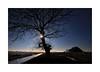 Biesbosch februari 2018 (cees van gastel) Tags: ceesvangastel canoneos550d sigma1020mm biesbosch noordbrabant natuur nature landschap landscape winter luchten skies trees froze bevroren