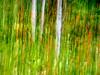 Poplars (www.clineriverphotography.com) Tags: landscape impressionist flora poplars davidthompsoncountry foliage forest alberta artistic canada 4x3 location 2013 preacherspoint aspect