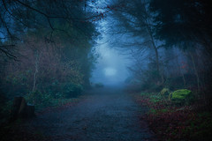 Forest Walk (Chris-Henry) Tags: killynetherfogforest woods countydown ireland northernireland newtownards ards comber colour color foggy misty scrabo trees walk warmth warm green path park grey nature light landscape lighting winter season