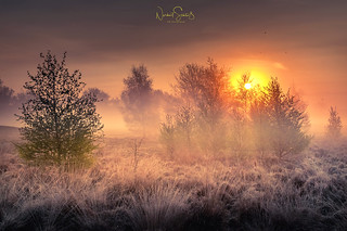 Frosty sunrise ... the dunes of Wissel, Kalkar, Germany