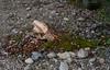 The whale is filled with sorrow (Alexander-_-Laz) Tags: baikal shore wood lumber log moss stone pebble rock whale eye sadness death flinders