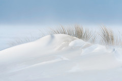 Sandy Snowdunes (Dani℮l) Tags: beach schiermonnikoog island snow blizzard wind dune snowdune sand white storm netherlands winter ice beachgrass daniel bosma groningen friesland nederland holland northsea noordzee minimalistic minimaal wit sneeuw rust