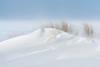 Sandy Snowdunes (Dani℮l) Tags: beach schiermonnikoog island snow blizzard wind dune snowdune sand white storm netherlands winter ice beachgrass daniel bosma groningen friesland nederland holland northsea noordzee minimalistic minimaal wit sneeuw rust