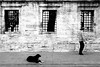 dci_034 (la_imagen) Tags: türkei turkey türkiye turquía süleymaniye istanbul istanbullovers sw bw blackandwhite siyahbeyaz monochrome street streetandsituation sokak streetlife streetphotography strasenfotografieistkeinverbrechen menschen people insan köpek hund dog