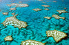 Print (LynxDaemon) Tags: coral reef barrier great whitsundays classic postcard australia water blue azure turquoise land island lines ocean travel underwater