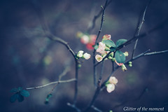 2017 01 22 - 164421 0 Canon EOS 5D Mark III (ONLINED1782A) Tags: branch birchtree season leaf tree treetrunk nature deciduoustree pinetree baretree birch treetop photo photography naturephotography myphotography plants plant flower flowers vsco vscofilm vscocam canonphotography winter canoneos5dmarkiii sigma50mmf14dghsm|art macro depthoffield pink silence simplicity streetshot townexplore grass