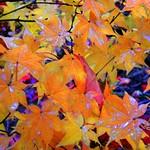 Pretty Wet Leaves thumbnail