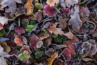 frost in Bochum
