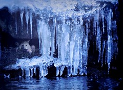 At the Bottom of the Great Ice Wall (pianocats16) Tags: wolf artic polar white direwolf ghost cub plush game thrones ice frozen waterfall wall imagination fantasy tierpark zoo