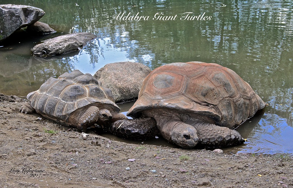 The world 39 s best photos of tortue and turtle flickr hive for Stagno tartarughe