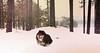 Are we enjoying ourselves, or are we enjoying ourselves? A bit of a Shakespeareian riddle if you ask me. (evakongshavn) Tags: winter joy simplejoy dog dogsonadventures dogphotography dogs snowdog swooschouthiking hiking hikingdogs onmywalk walkingthedog walk winterwonderland winterwald winterlandscape snow new light white paysage landscape landschaft hivernal hiver natur nature wald forest foret happy happydog joyful enjoy enjoyingthemoment carpediem