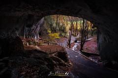 DIU_57 (jpmfotografianocturna) Tags: largaexposicion estaesnavarra zugarramurdi brujas turismonavarra lovesnavarra cueva otoño luznatural naturaleza paisaje landscape arboles bosque forest nikonistas blending