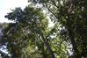 DSC_2191 (markpeterson1) Tags: jdtreepros redoak treeremoval