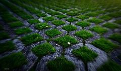 Simetrias (antoninodias13) Tags: parque estacionar relva verde simetrias foco amadora lisboa portugal