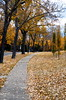 Sidewalk Through Leaves (Bracus Triticum) Tags: sidewalk through leaves calgary カルガリー アルバータ州 alberta canada カナダ 10月 十月 神無月 かんなづき kannazuki themonthwhentherearenogods 平成29年 2017 autumn october