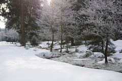 snowy creek (Stefan_Brinkmann) Tags: harz schnee snow tree nature forest winter frost ice plant branch landscape water outdoors outdoor cold flora freezing covered frozen woodyplant man land country weather woodland riding cross vegetation season sky standing grove wood snowwhite field frosty slope frostyweather hill winterstorm surrounded walking scene wearing creek icy snowy