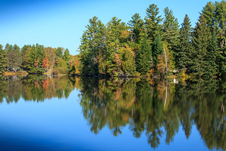 Black River Reflections