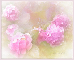 Life always bursts the boundaries of formulas (Antoine de Saint Exupéry) (boeckli) Tags: flowers hydrangea flower hortensie blume blumen blüten bloom blossom blossoms blooms pink rosa plants plant pflanzen pflanze outdoor textures texturen texture textur painterly pastel pastell topazimpression evelynflint temari09 leaves blätter ie tas 7dwf