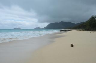 Coconut on Stormy Hawaiian Beach
