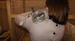 Знакомьтесь – кошки!