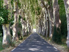 La route (September Songs) Tags: languedocroussillon platanes platany france francja