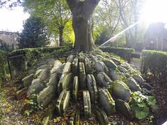 The Hardy Tree (Melissa Osorio Photography) Tags: hardytree london uk travel photo photography grave gravestone tree creepy eerie melissaosorio melissa osorio light